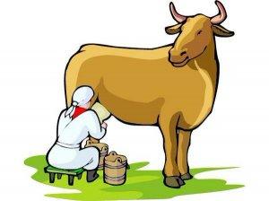 От фермы до магазина: добыча молока