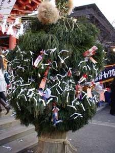 Какие новогодние деревья украшают в других странах?